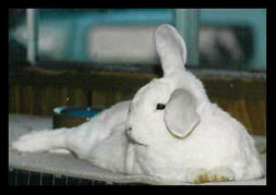 Jack Frost the Bunny Photo